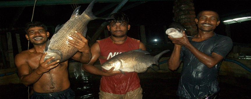 Biswas Hatchery-A Leading Fish hatchery in Westbengal,India